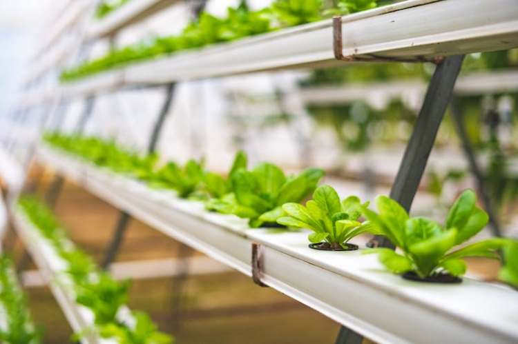 hydroponic products canada